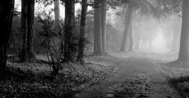 misty-trees-3.1-1500