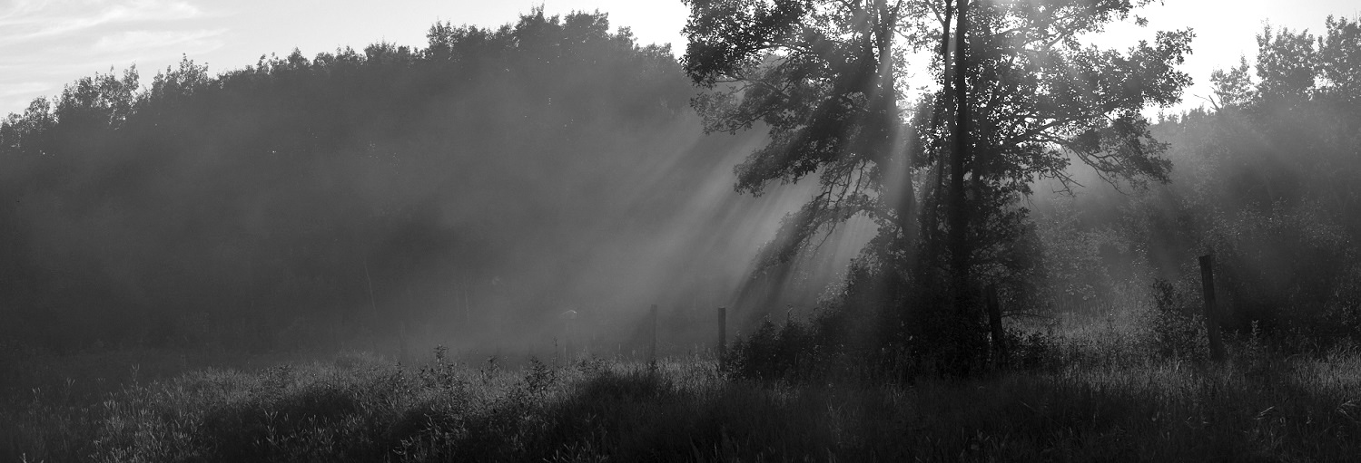 misty-trees-2-bw