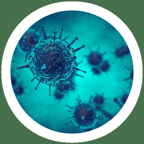 Image of immune system