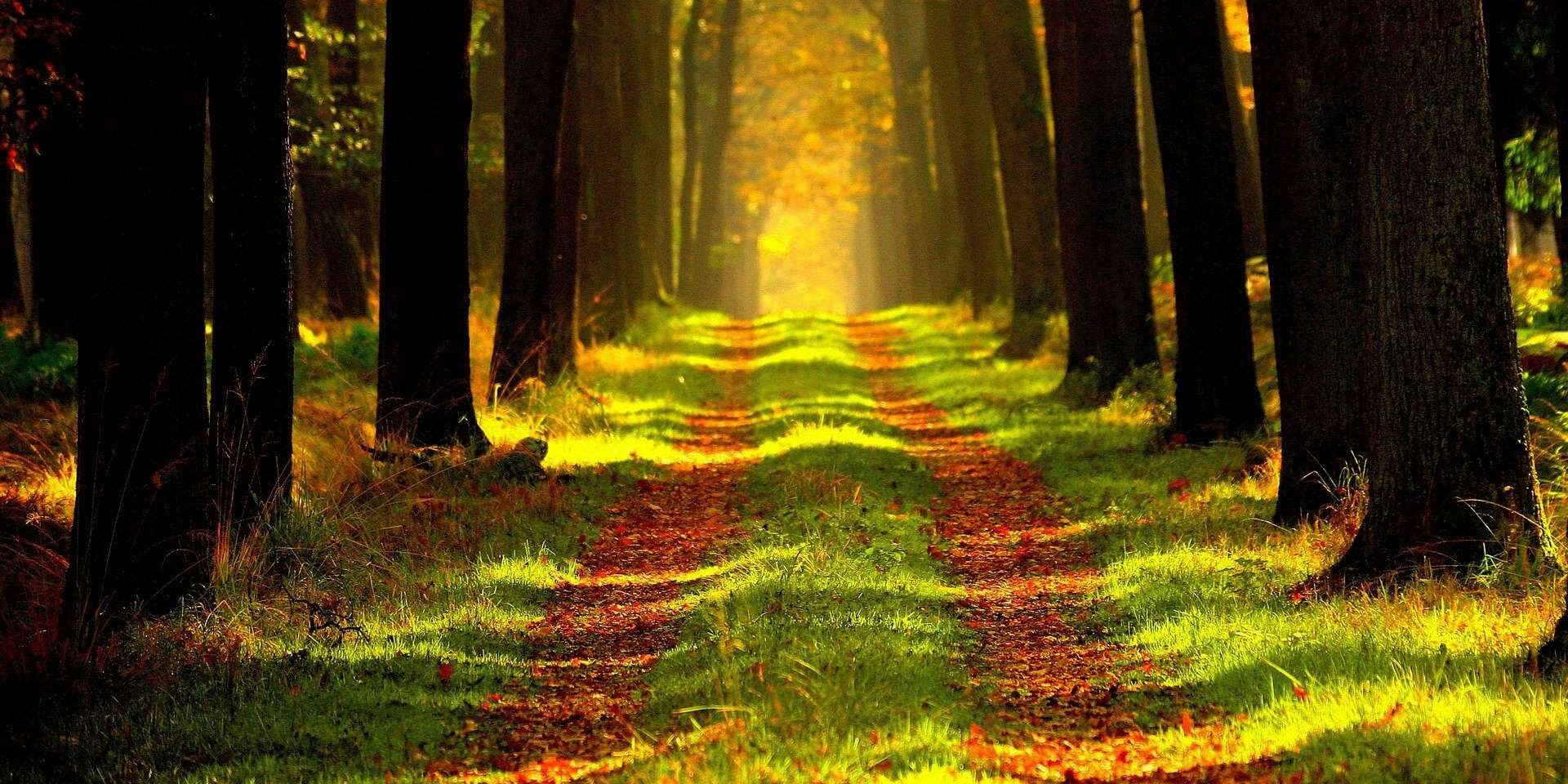 CK Health and Wellbeing - Hypothyroidism and Hashimotos Disease Line of Trees Forest